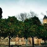 Die Bäume hängen voll mit Früchten.