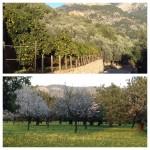 Orangen-, Mandel- und Olivenbäume satt.