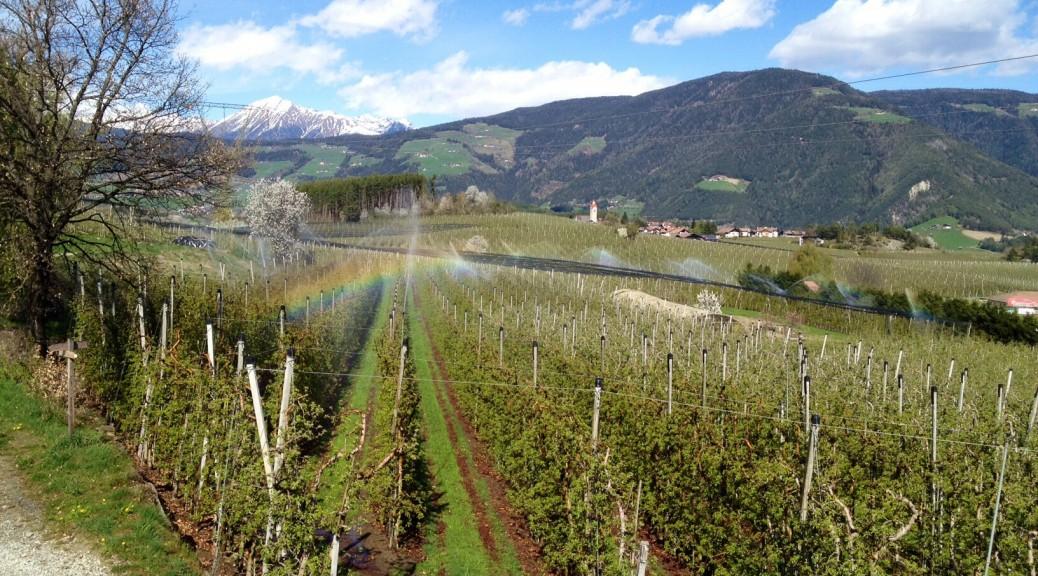 Die Streuobstwiesen Südtirols
