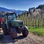 in den Apfelplantagen wird fleißig gearbeitet