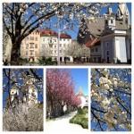 Domplatz und Hofgarten
