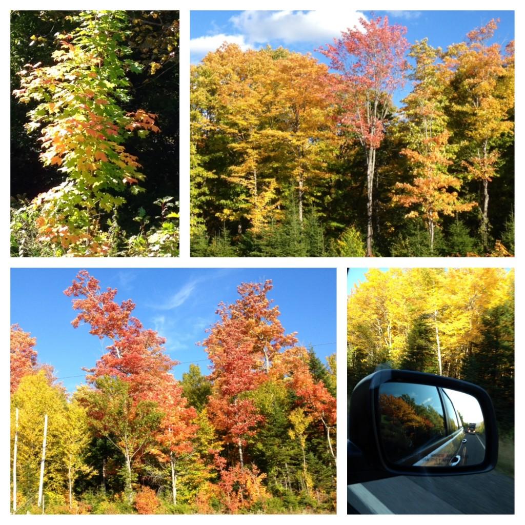 Die Bäume am Wegesrand leuchten in den schönsten Herbstfarben